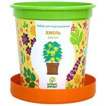 Happy Plant: Хмель добрый
