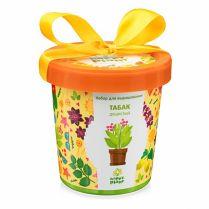 Happy Plant: Табак душистый